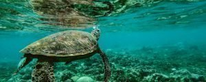 snorkelen-australie